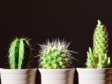 comment prendre soin d'un cactus