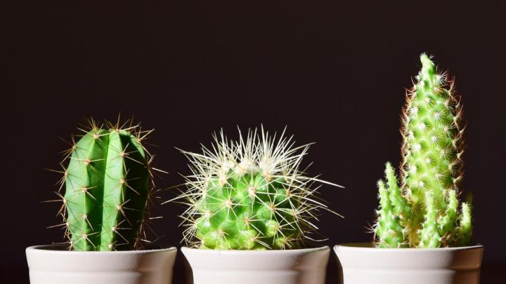 Comment prendre soin d'un cactus ?